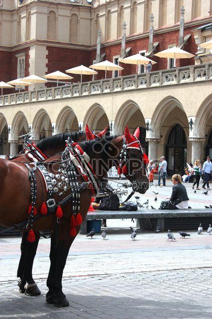 cavalerie à Cracovie - image gratuit #335251