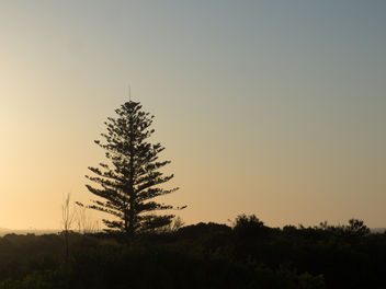 Lone Pine - image gratuit #336451