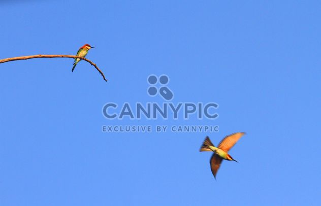Kingfisher birds in blue sky - Free image #337441