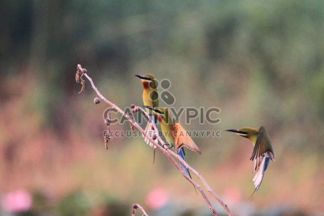 Kingfisher birds on branches - Free image #337451