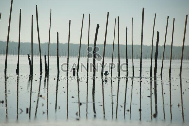 Pájaro entre palos en el mar - image #337531 gratis