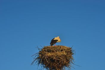 Stork in nest against sky - Free image #337561