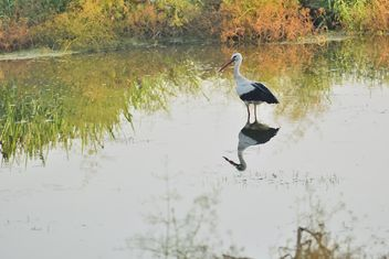 Stork standing in lake - Free image #337581