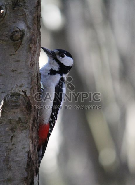 Woodpecker on tree in park - Free image #337811
