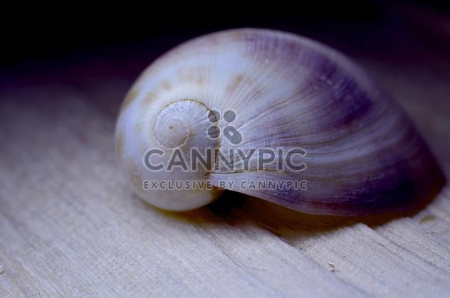 Closeup of beautiful seashell - image #338281 gratis