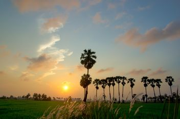 Landscape with palms at sunset - Free image #338481