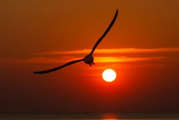 Seagull in sky at sunset - image #338501 gratis