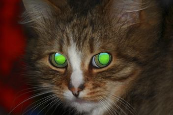 Portrait of tabby kitten - Free image #339191