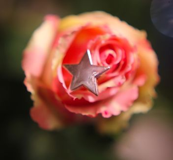 Rose with decorative star - image gratuit #339221