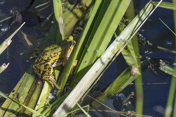 Hidden wildlife - image gratuit #341261