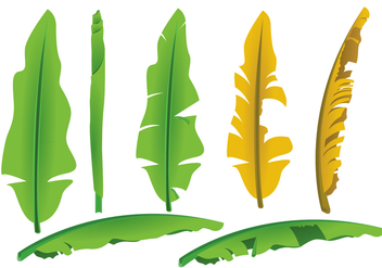 Banana Leaf Vectors - бесплатный vector #343701