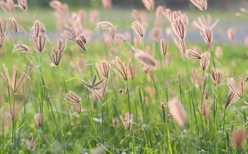 Close-up of spikelets on green background - image gratuit #343851