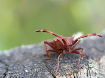 Red insect on a tree stump in the forest - image #343911 gratis