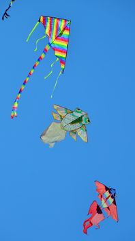 kites in the blue sky - image gratuit #344211