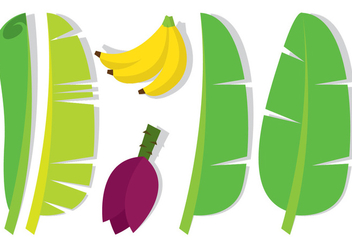 Banana Leaf and Fruit - vector gratuit #346311