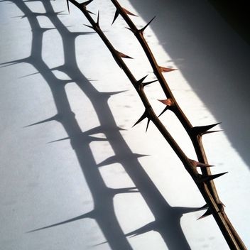 Branches with thorns on white background - бесплатный image #346931