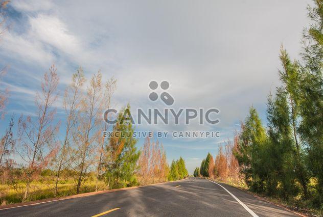 Route de campagne avec la belle nature - image gratuit #347201