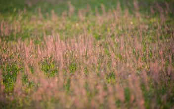 Background of grass on summer field - бесплатный image #347321