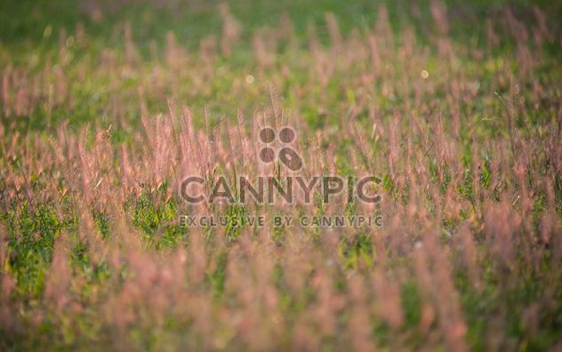Background of grass on summer field - Free image #347321