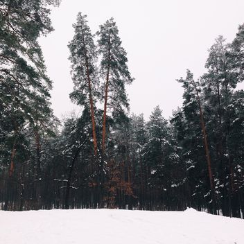 Amazing landscape with trees in winter forest - бесплатный image #347731