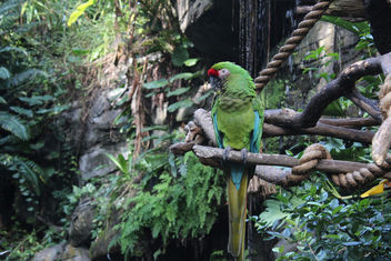 Military Macaw - Free image #347901