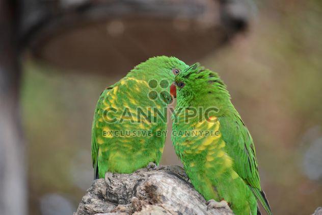 Pair of green lorikeet parrots - Free image #348471