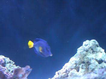Aquarium marine - image #350211 gratis
