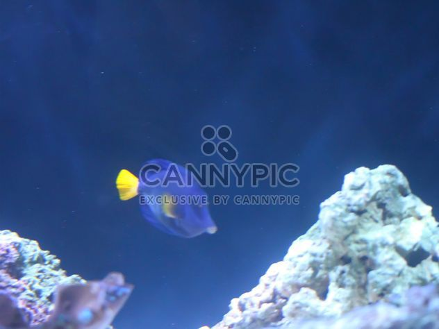 Aquarium marine - Free image #350211