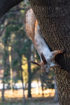 squirrel sitting on the tree - image gratuit #350291