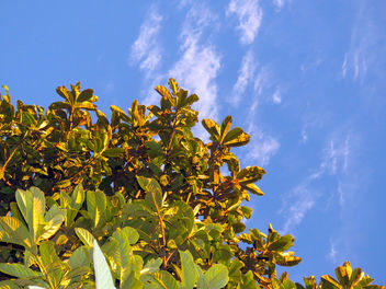 Medlar Tree Under Blue Skies - image gratuit(e) #350811