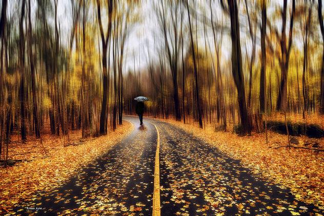 nice walk - Free image #351191