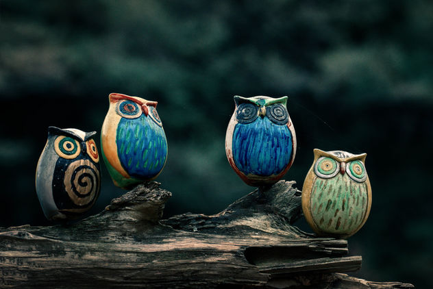 Owl Brothers - Free image #356671