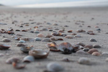 Some shells - image gratuit(e) #357181