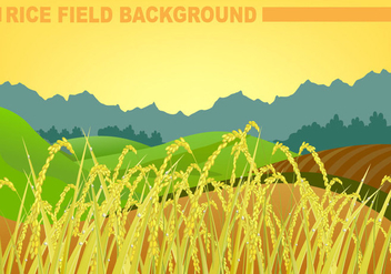 Rice Field Background Vector - vector gratuit #357711