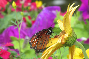 Butterfly Garden - Free image #361481