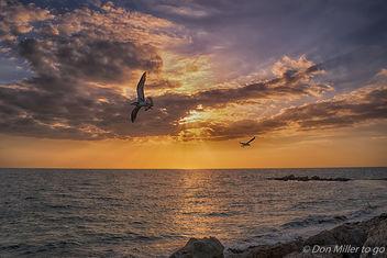 My Florida - Free image #362831