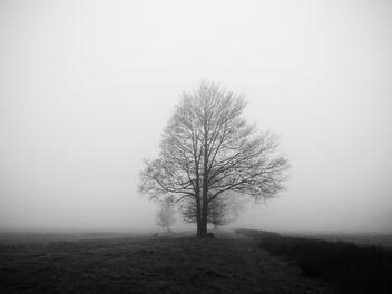 Eik in de mist - Free image #363271