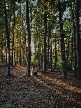Girl sitting in forest - Free image #363651