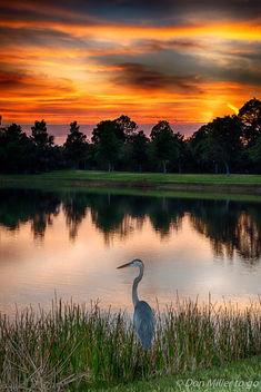 My Florida - image gratuit #365541