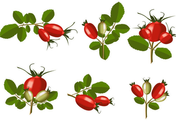 Isolated Rosehip Vector - vector gratuit #365691