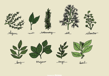 Hand Drawn Herb Vectors - Free vector #368461