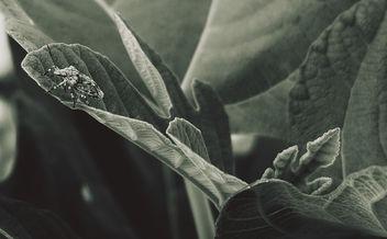 Bug me - бесплатный image #376571