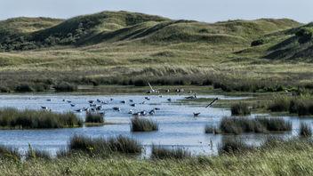 Bird nestingarea, De Slufter - Free image #376801