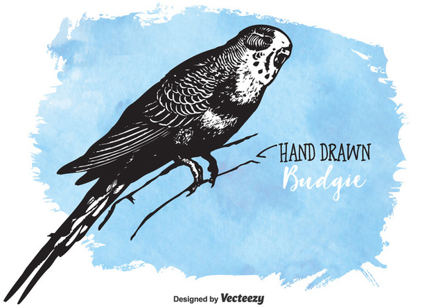 Free Drawn Budgie Vector - vector gratuit #378041