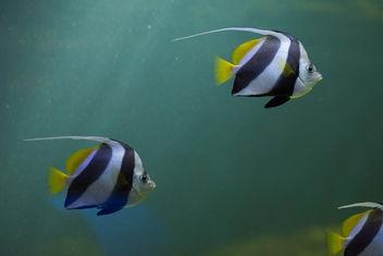 aquaria3 - Free image #379841