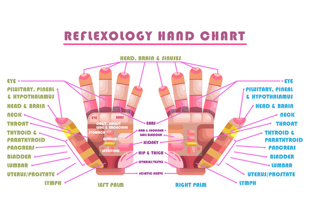 Reflexology Vector Chart - бесплатный vector #380311