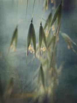 Winter Grass - Free image #383121