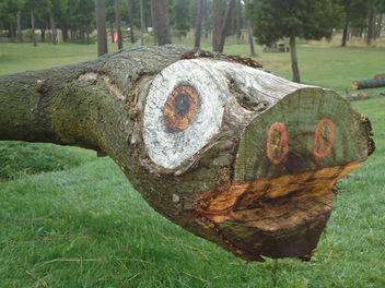 Funny Tree Trunk - Free image #385211