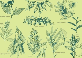 Aromatic Plants - vector gratuit #385631