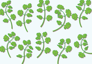 Cilantro Vector Herbs - Free vector #385781